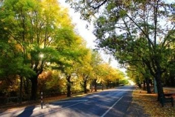 Daylesford-Avenue-of-Honour