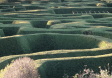 Maze-House-Hedge-Gardens.png