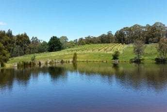 Vineyard-water-view.jpg