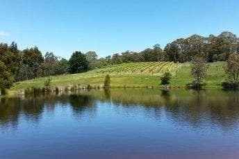 Vineyard-water-view.jpg