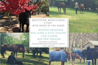 Meditation-Mindfulness-Chai-with-Heart-of-the-Horse-winter-sessions.png