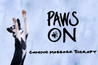 fb-cover-paws-on-1.jpg
